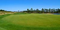 Cape Fear National Benefits from Use of Hybrid Bentgrass