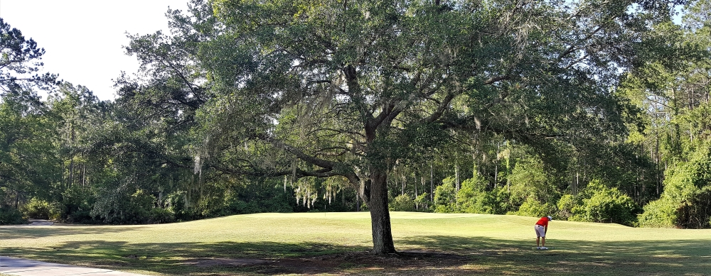 The Tree Can Make for a Tough Approach on Number 9